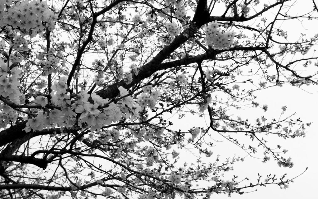Flower_monochrome