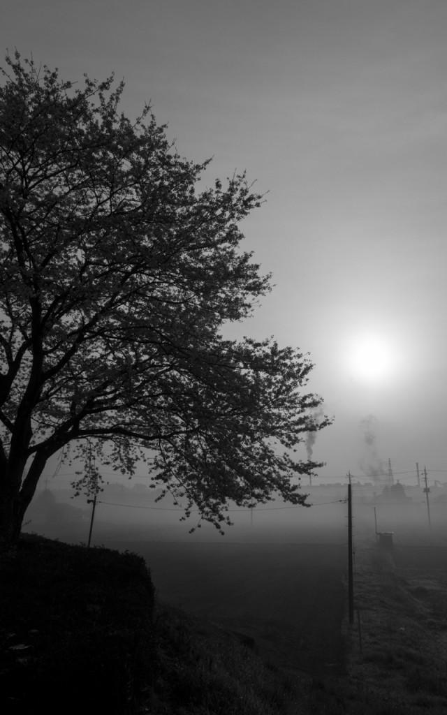 ちょっと霧が…