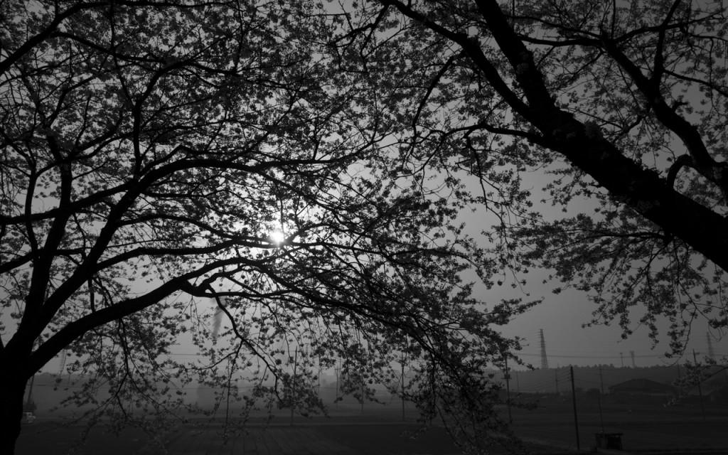 桜もそろそろ…