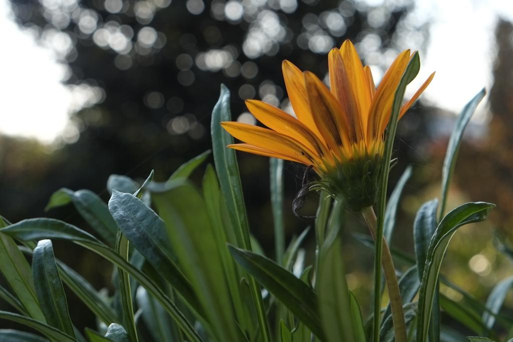 初撮り:花