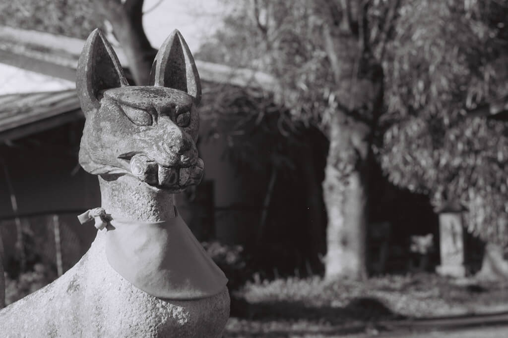 FE, NOKTON 58mm f/1.4 SL II N, ACROS