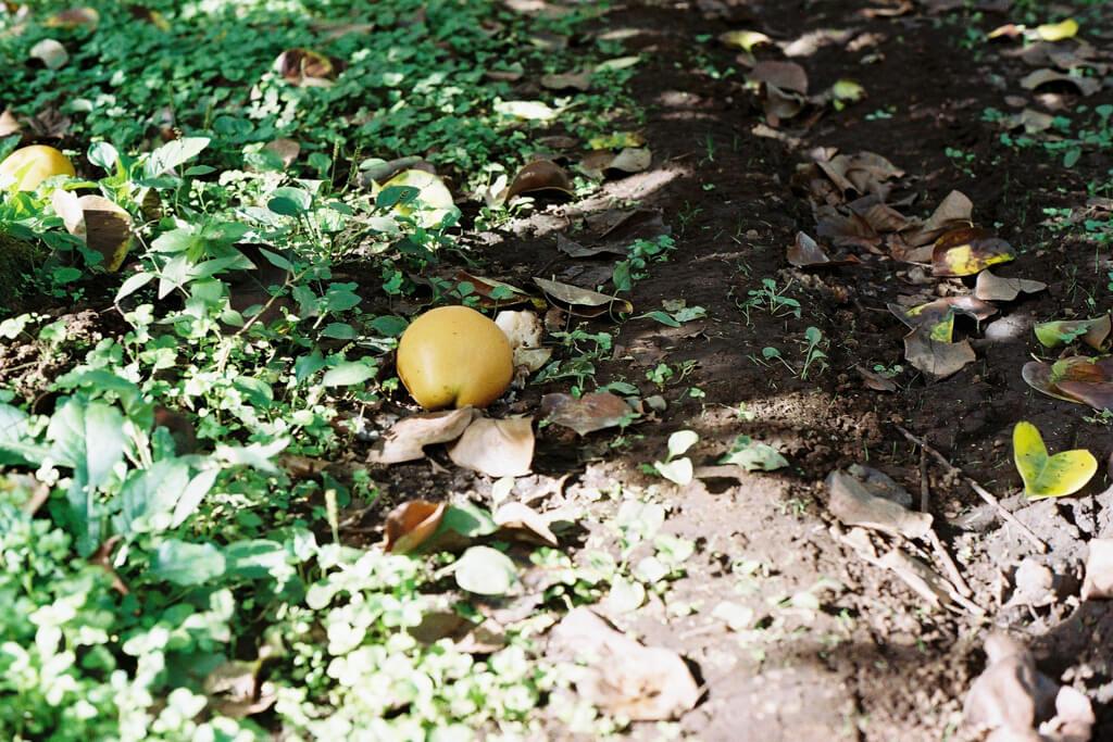 OM-1, G.ZUIKO AUTO-W 28mm f/3.5, KODAK GOLD